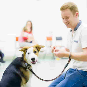 Puppy School client at training classes
